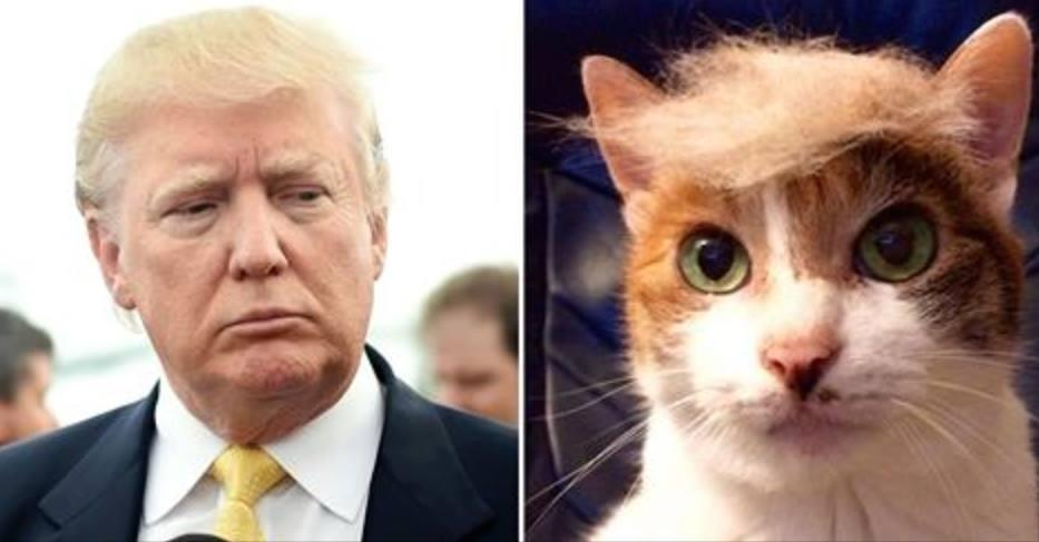 The Best #TrumpYourCat Photos - ViralPost