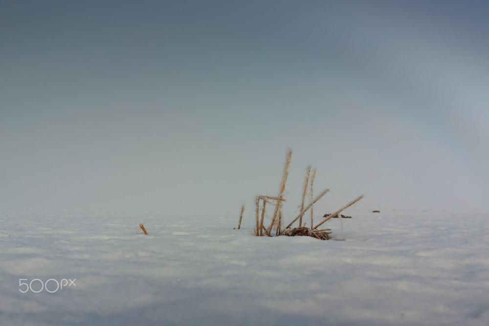 Frozen Straws On A Misty Day