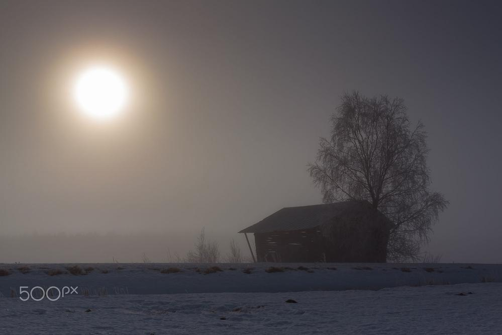 Barn And Birch Tree By The Fields