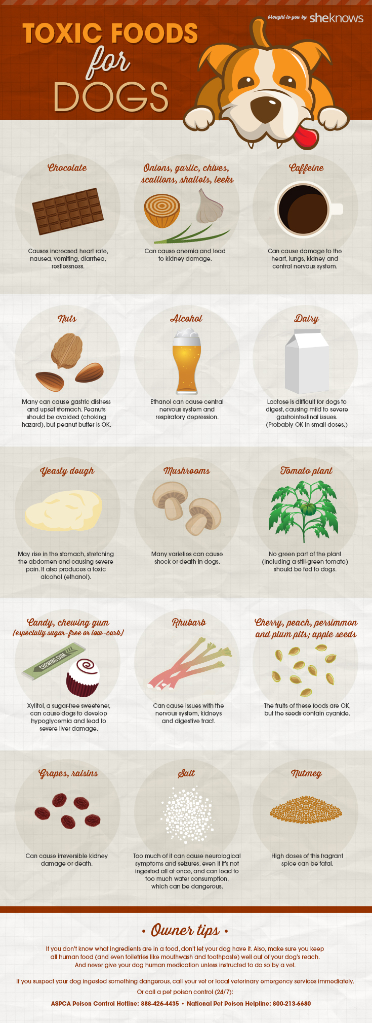 Here is a quality infographic that will teach you all about ... via David Eaves