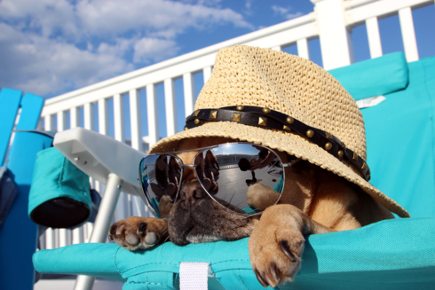 Travelling with Dog: Make it Safe and Wonderful - Lifestyle in the Sun