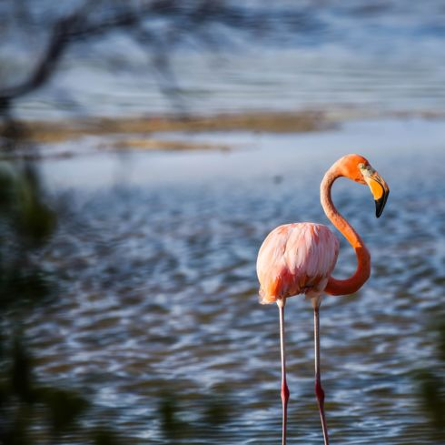 Flamingo Image, British Virgin Islands |National Geographic Photo of the Day