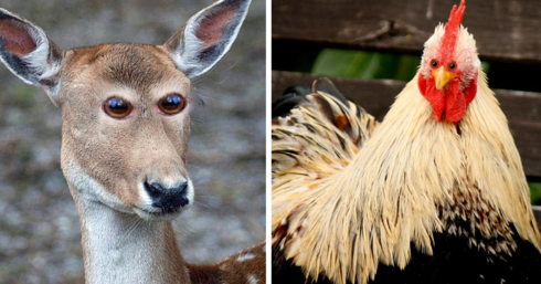 What 10+ Different Animals Would Look Like If Their Eyes Were At The Front
