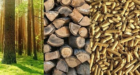 Cómo el crowdfunding impacta en la biomasa