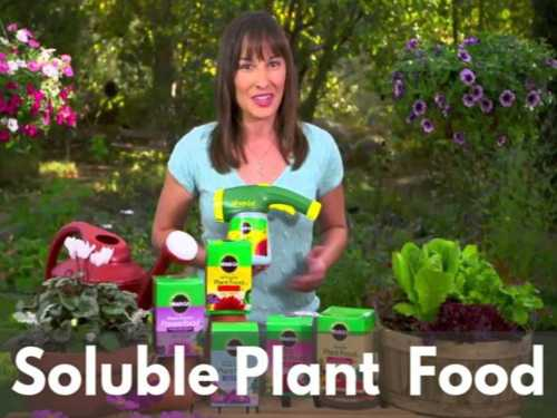 Advice On Choosing The Right Soluble Plant Food For Your Garden