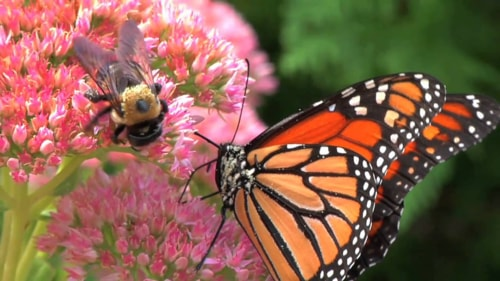 Small Iowa City is Setting Aside 1,000 Acres Just For Bees and Butterflies