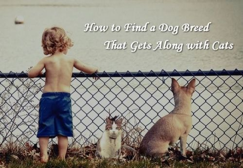 How to Find a #Dog #Breed That Gets Along with Cats   Modern... via Amit Verma