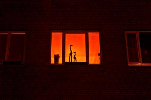 African Sunset On A Window via Jukka Heinovirta