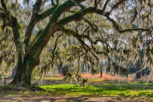 Under the Old Oak Tree via Stacy White