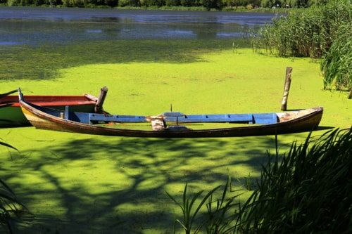 Boat in the green via Gil Reis