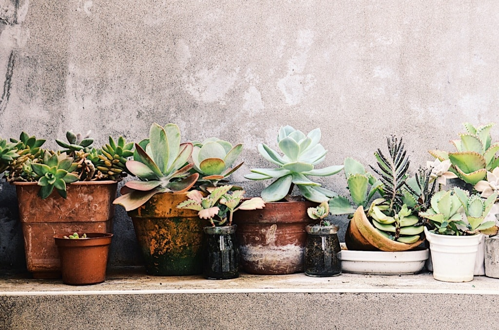 Succulents in Taipei Artist Village via Christy Lin