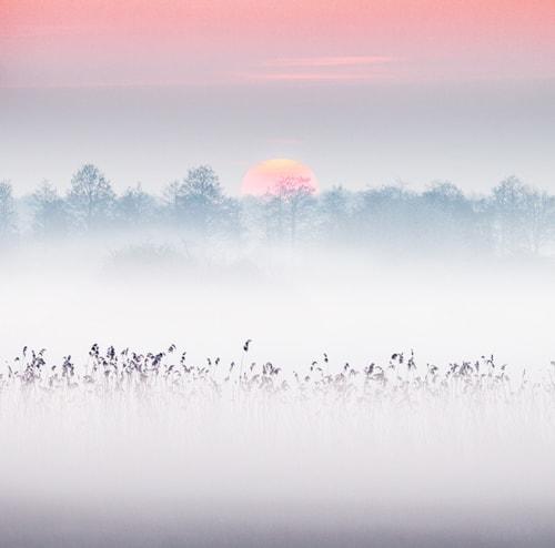 Foggy sunrise via Ruud Peters