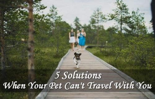 5 Solutions When Your Pet Can't Travel With You