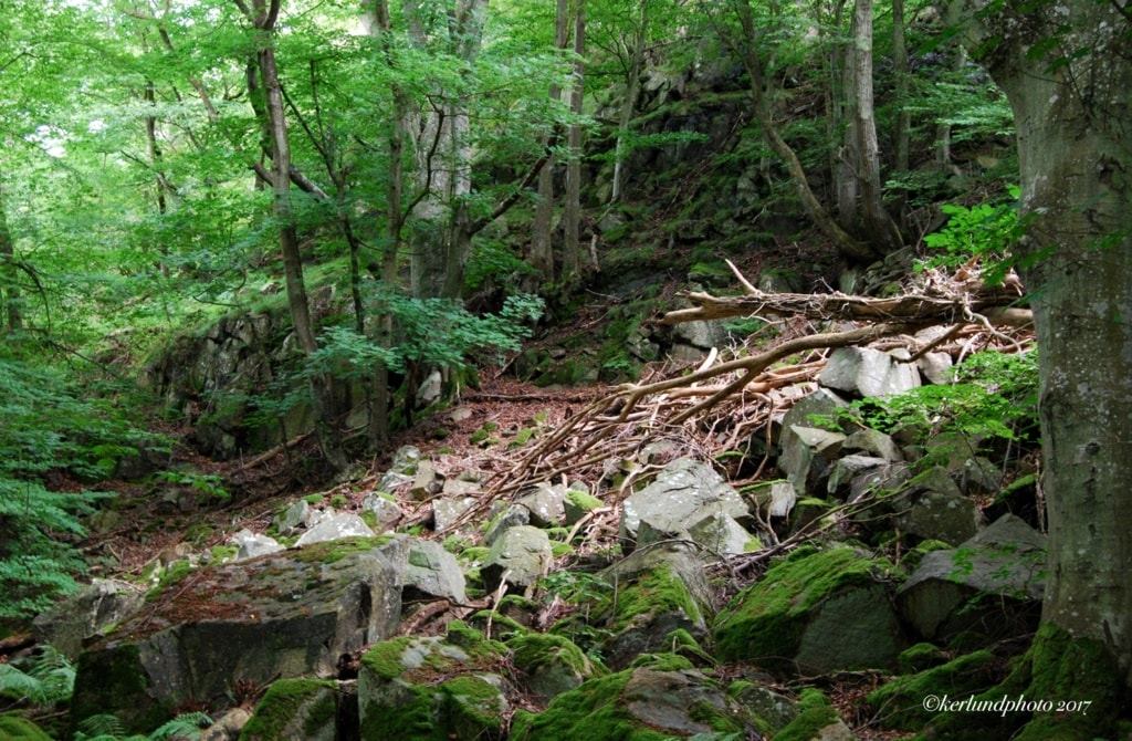 Out in the woods...                                         #photography #travel #hiking #nature #fo... via L Kerlund