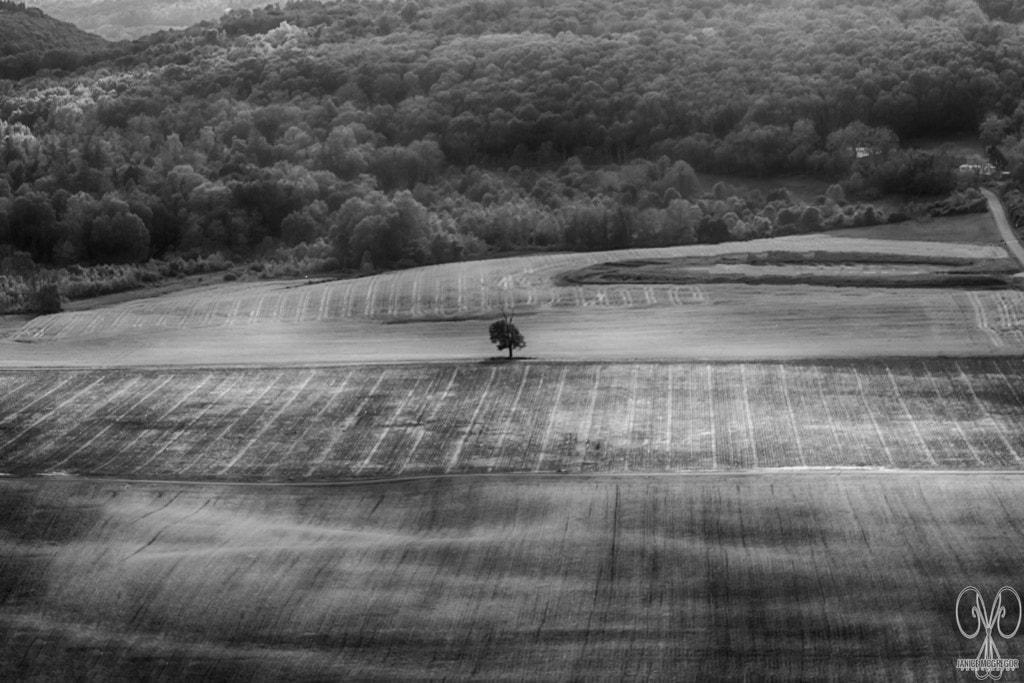 Pa. Farmland via Janice McGregor