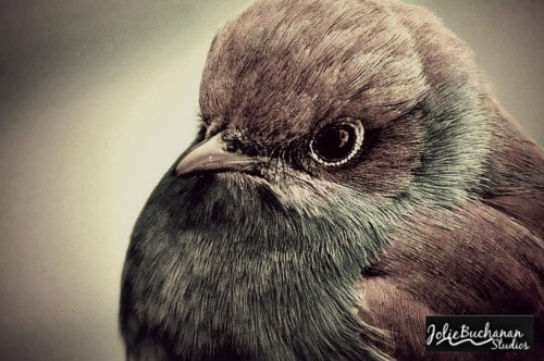 Nesting Watch via Jolie Buchanan