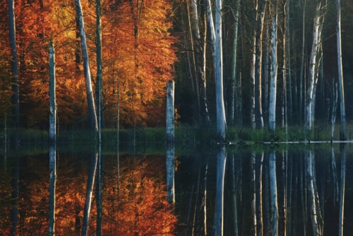 Digital Photography: Autumn At The Lake Series