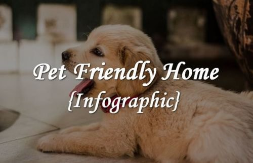 Pet Friendly Home {Infographic}