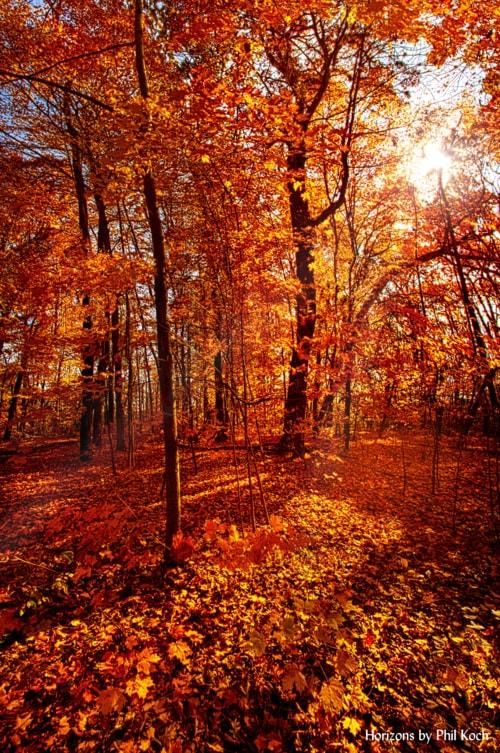 """Autumn Walk""                                     Wisconsin Horizons By Phil Koch. via Phil Koch"