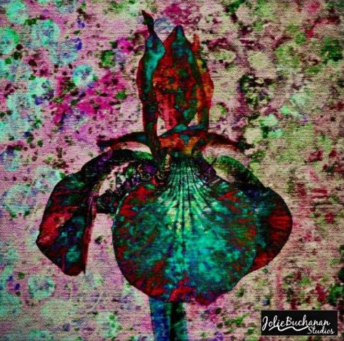 Bloom via Jolie Buchanan