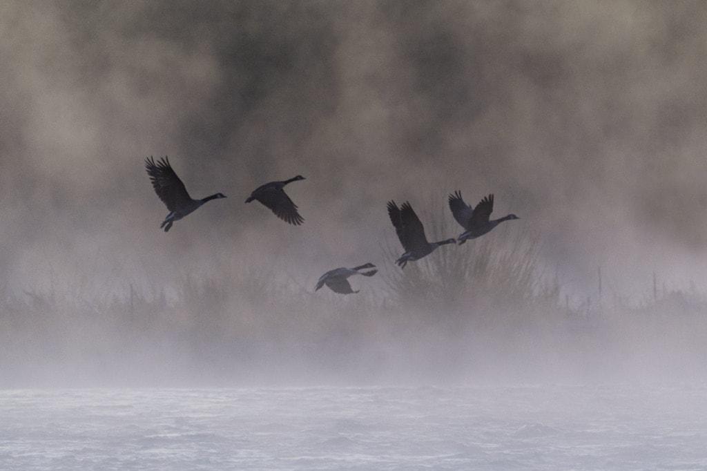 Early Morning Flight via Stacy White