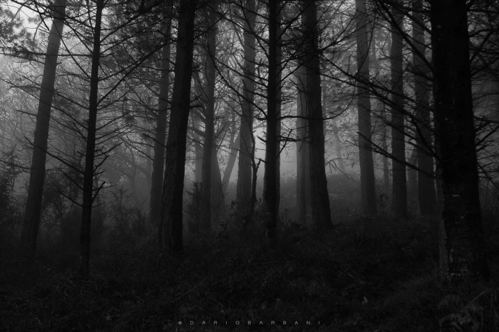 Dark Trees via Dario Barbani