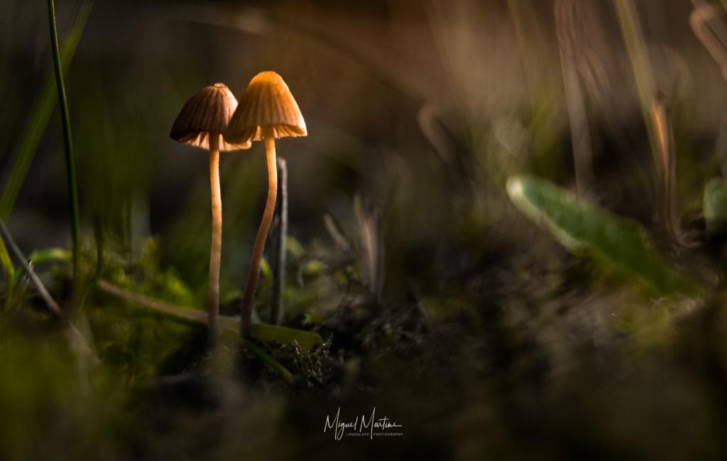 Mushrooms Session via Miguel Angelo Martins