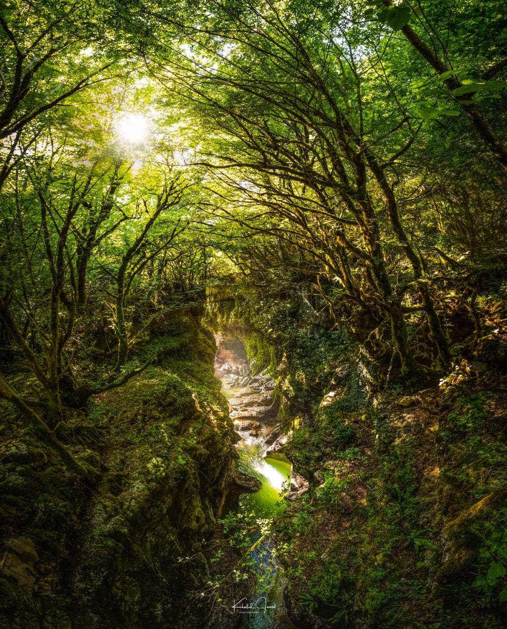 Through the forest via Khalid Jamal Abdullah