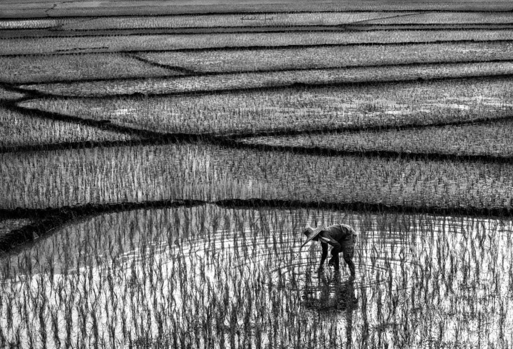 Farmer via Khalid Jamal Abdullah
