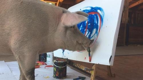 Watch South Africa's Pigcasso, the Famous Painting Pig, at Work