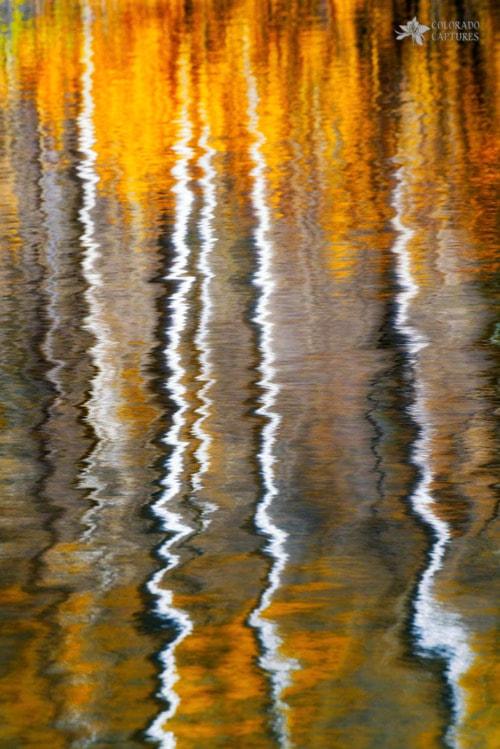 Aspen Ripples Of Gold - Telluride, Colorado via Mike Berenson