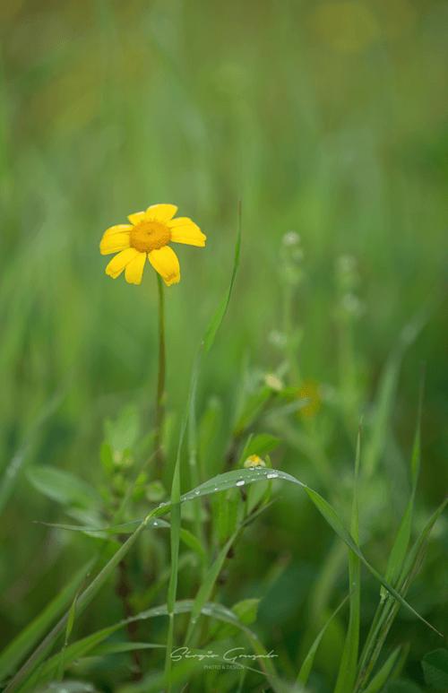 Yellow between green via Through the eyes of Sérgio Gonçallo