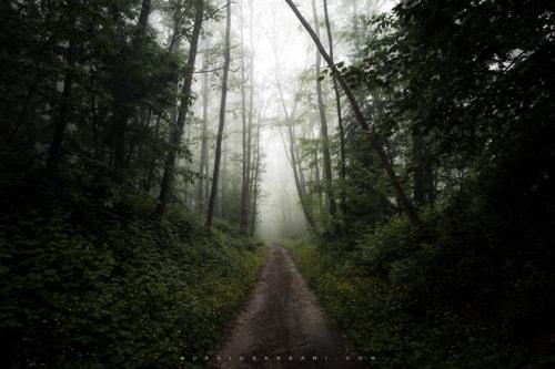 Silent Green via Dario Barbani