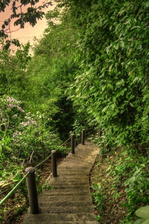 A walk through nature via Melony Mejias