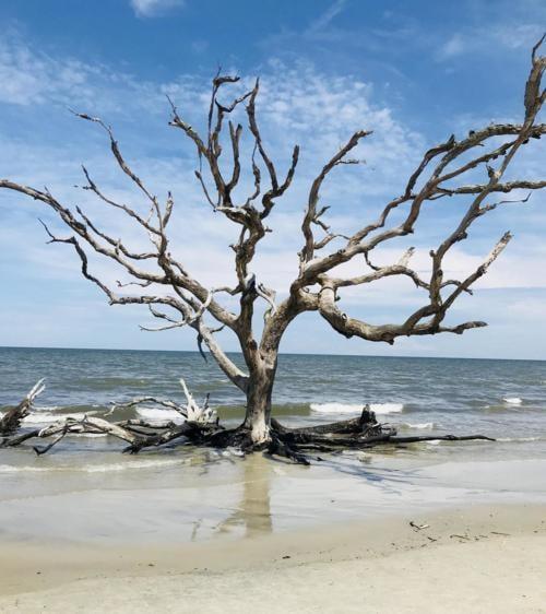 Earth Porn - Driftwood Beach, Jekyll Island, Georgia [OC]...