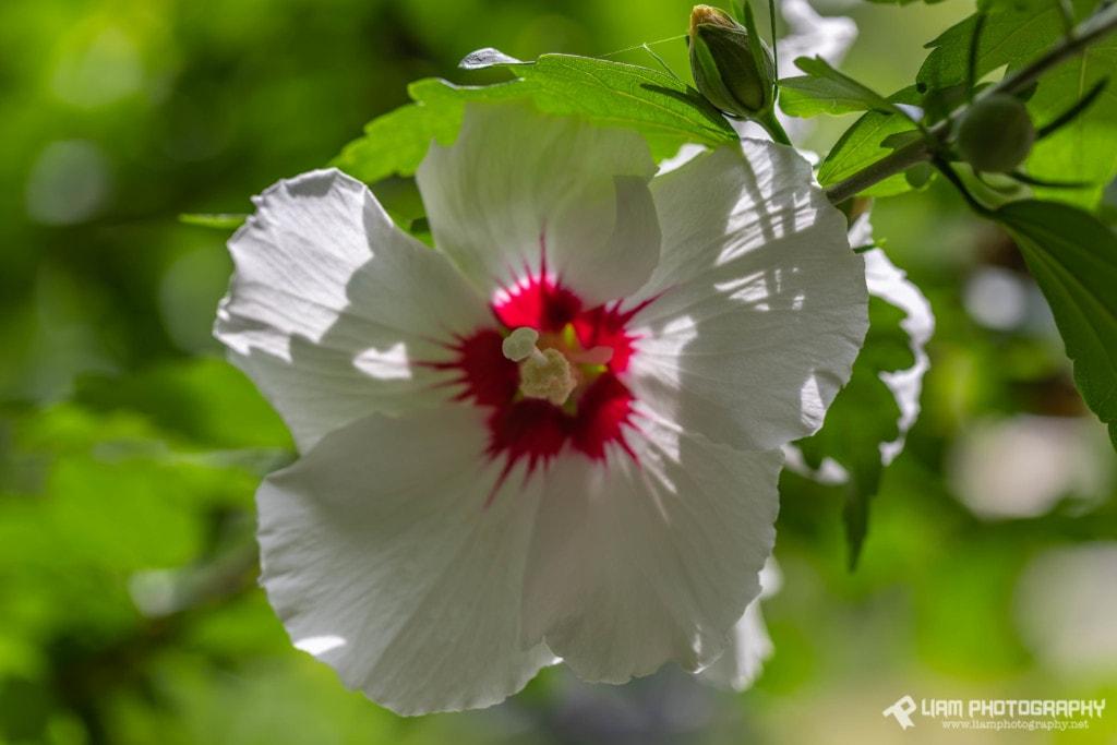 Spring Blossom via Liam Douglas - Professional Photographer