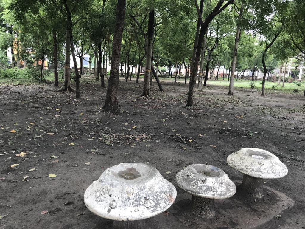 Three Mushrooms #iphone_photography via Shahab Khan