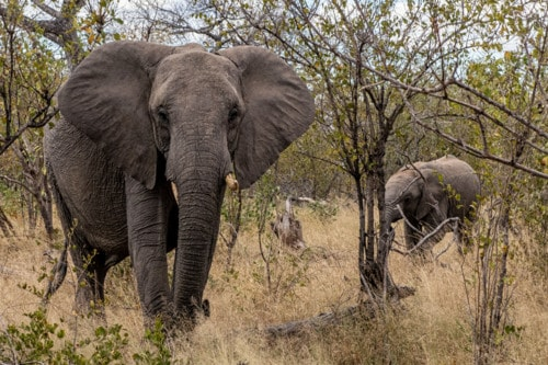 World Elephant Day via Stacy White