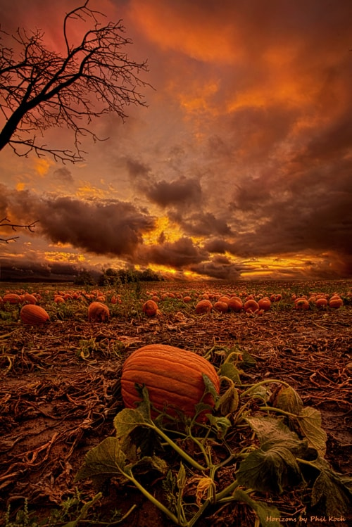 """Waiting"" via Phil Koch"