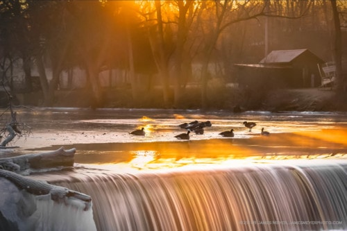 Geese at Rest via JamesMeyerMedia