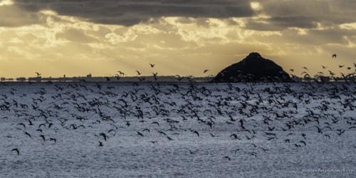 The Swarm via Jean Michel