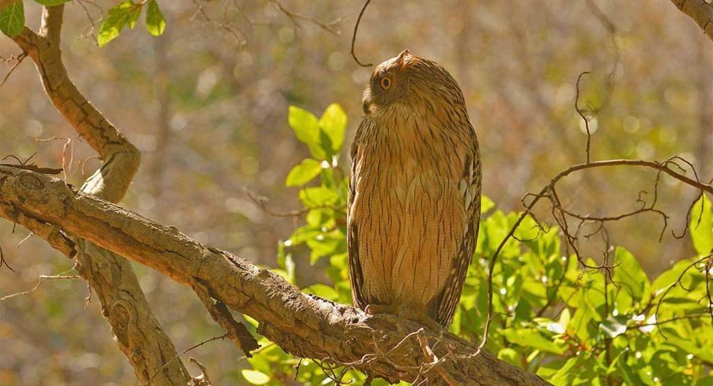 Birding Tours India via Wild World India