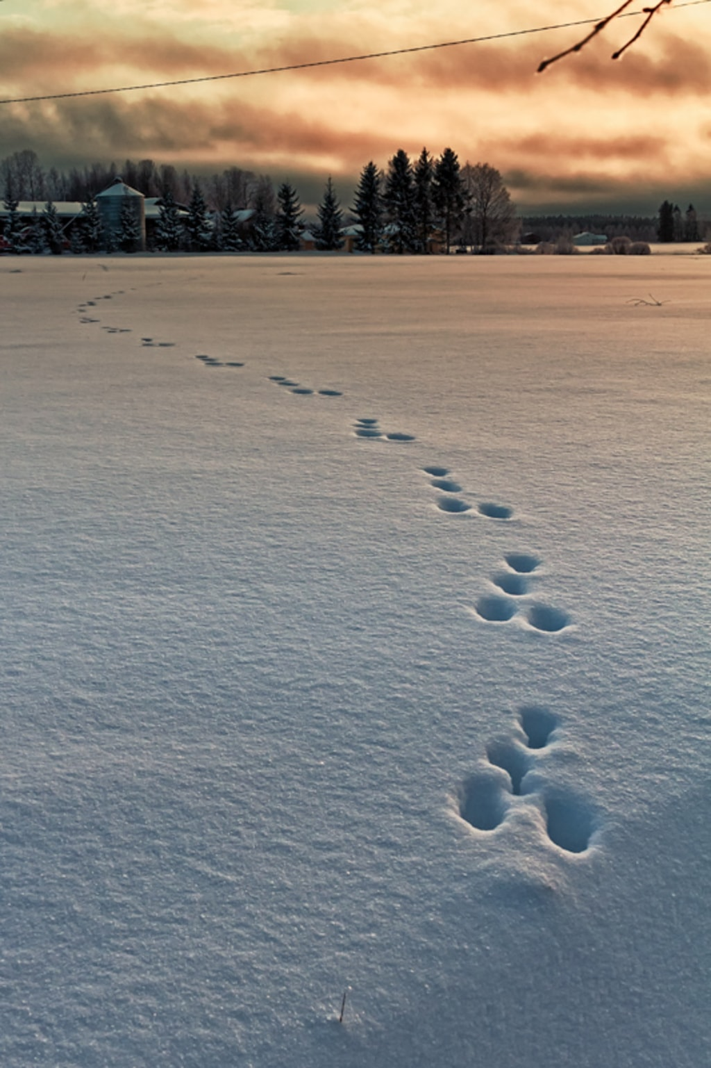Rabbit Footprints In The Sunset via Jukka Heinovirta