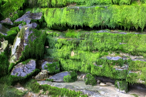 Greens via Gil Reis