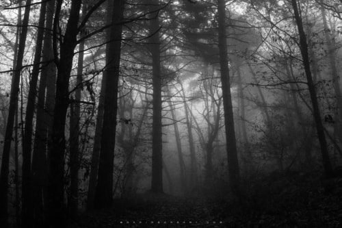 Almost Dark via Dario Barbani