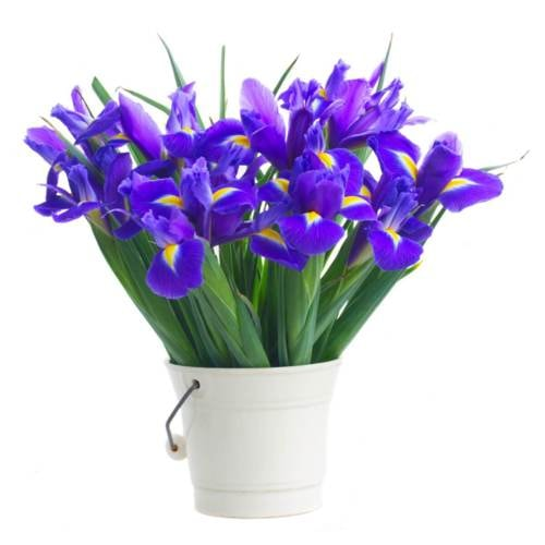 YuvaFlowers - Send Flowers In Faridabad Within 3 Hours via Rakesh Singh