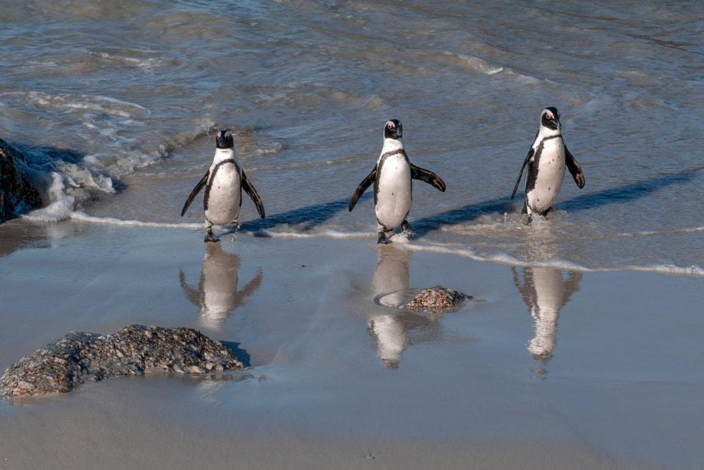World Penguin Day via Stacy White