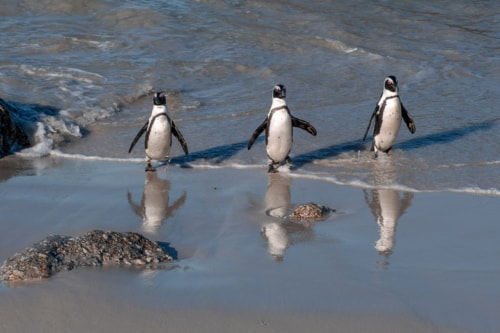 World Penguin Day via Stacy White