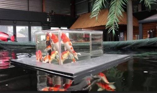 Hướng dẫn làm bể cá cảnh mini bằng nhựa