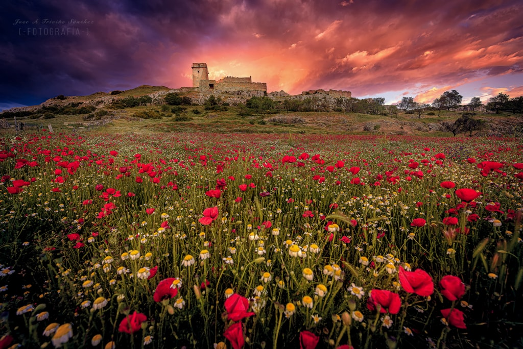 spring at the Castle via Jose Antonio Triviño Sanchez